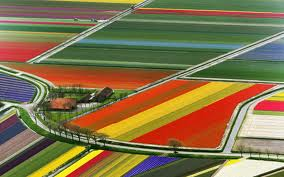 Tulip Farm Like Facebook